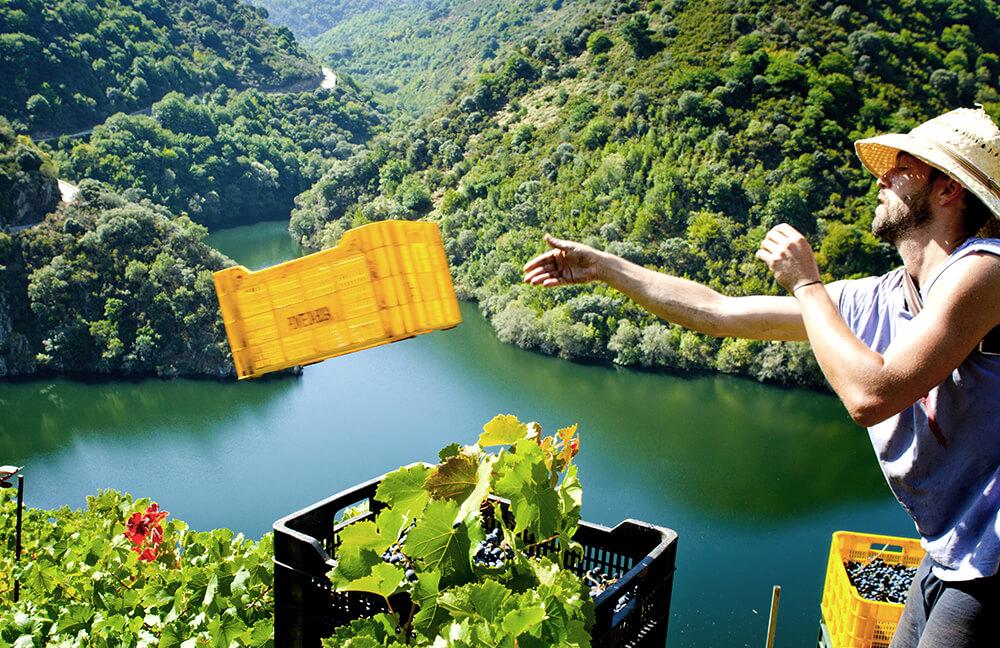15-viticultura-heroica
